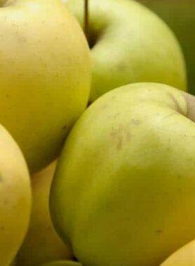 Pomme Golden Rush
