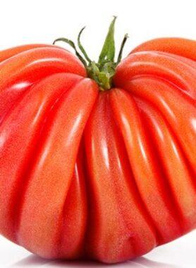 Tomate ancienne : Coeur de Boeuf
