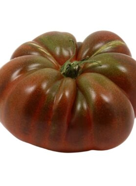 Tomate ancienne : Coeur de Boeuf Noir