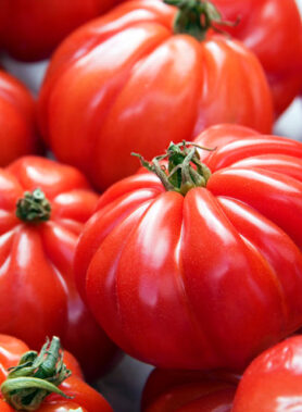 Tomate ancienne : Marmande