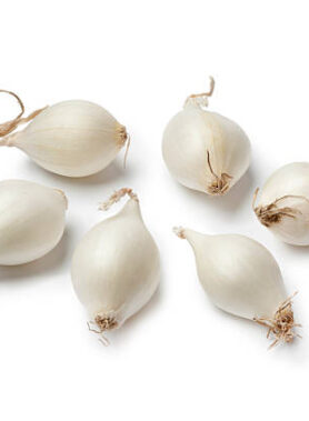 Small white Pearl onions often used to be pickled