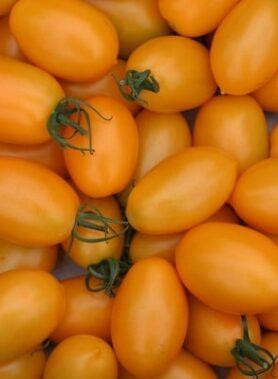Tomate ancienne : Roma Orange